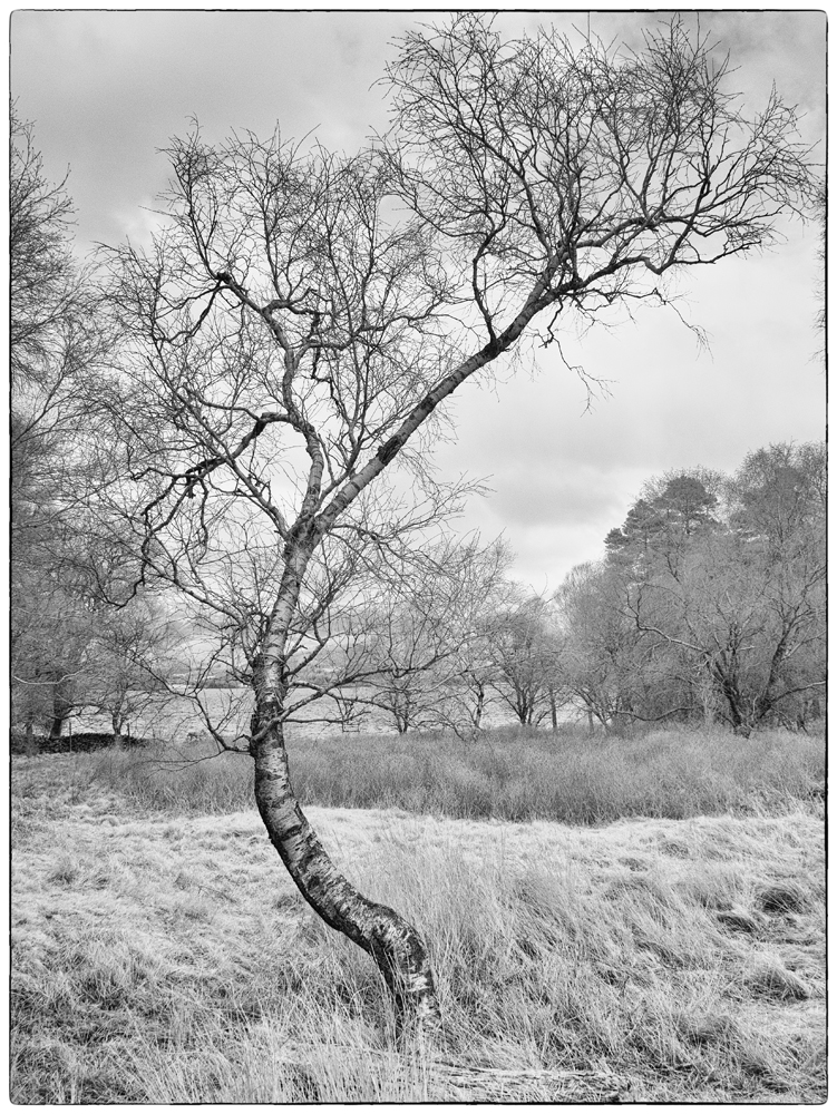 Captured on an infrared converted GX1. Conversion from RAW was in Silkypix Studio 5. Conversion to Black and White using Nik Silver Efex Pro 2.