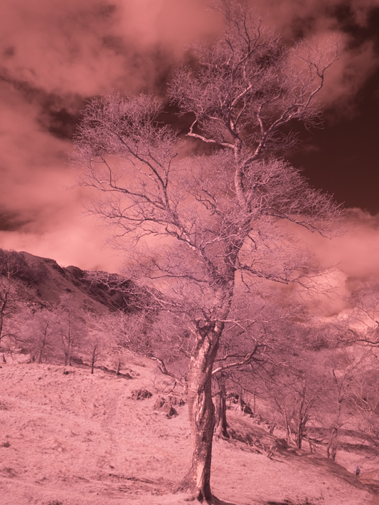 GX1 Infrared RAW file in Lightroom 4