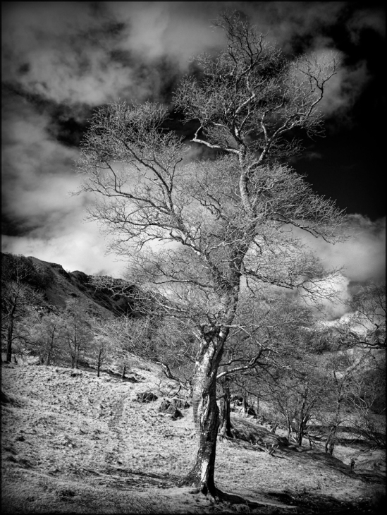 GX1 infrared converted camera with 14-45mm lens. Conversion to Monochrome in Silver Efex Pro with RAW conversion in PhotoNinja.