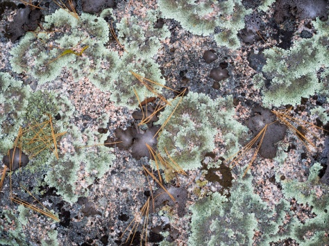 Lichen and rock. Captured with a 60mm Macro lens on an Olympus EM5
