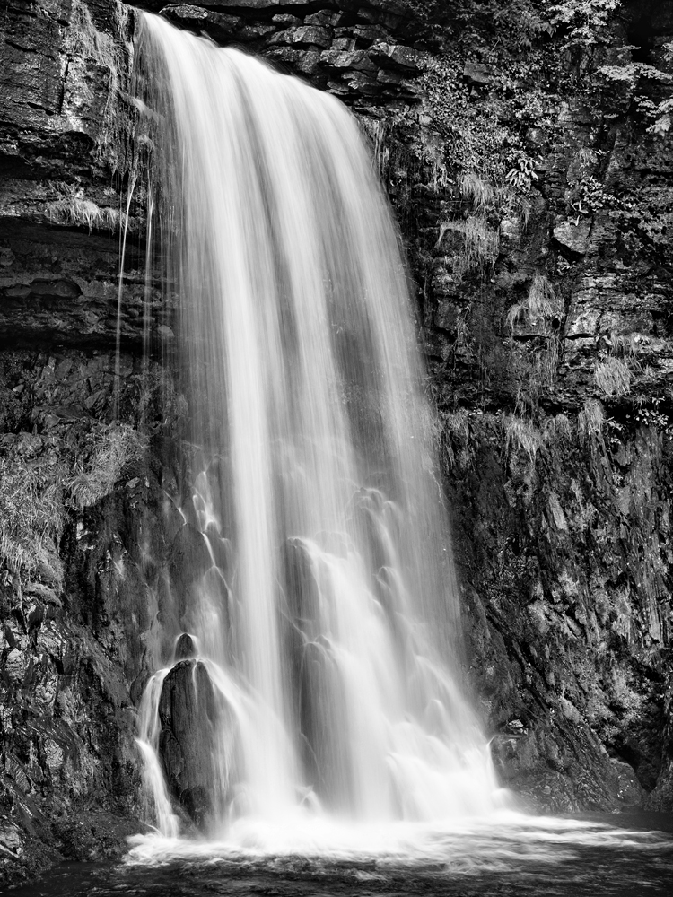 Thorntons Force