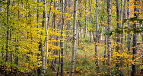 Woodland scene from Acadia National Park, Maine, USA