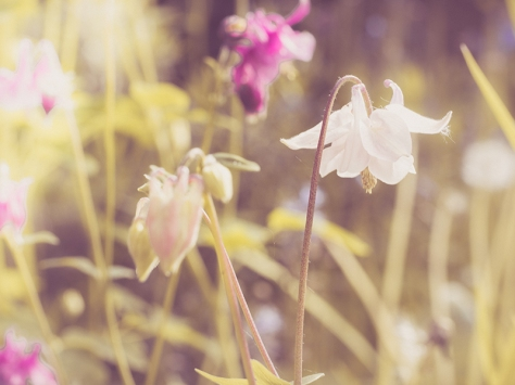 Example of the Faded Summer Colour preset for Lightroom. Available as a free download from my Lenscraft website.