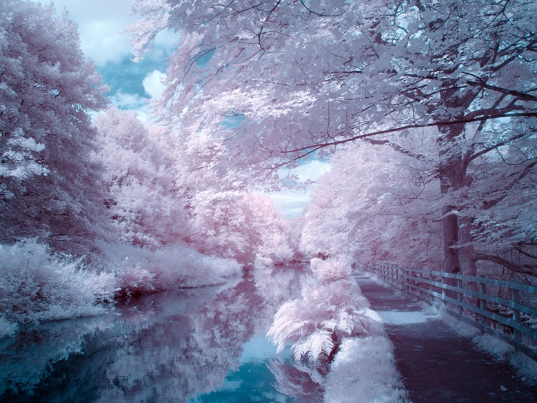 False colour infrared using Infrared converted Panasonic GX1