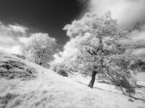 Infrared conversion from my GX1 Infrared camera