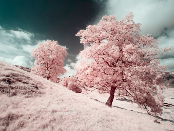 GX1 Infrared image converted with a red blue channel swap to create a false colour