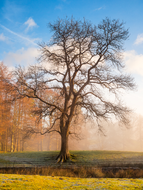 """Tree in the Lake District. Olympus EM5 ISO200, f/7.1, 1/125"""", 28mm"""