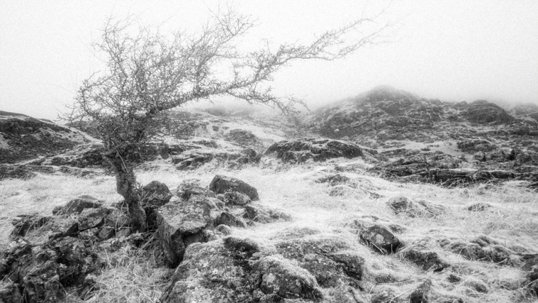 Taken with a Panasonic GX1 converted to shoot infrared. Post processing in Alien Skin Exposure 7.