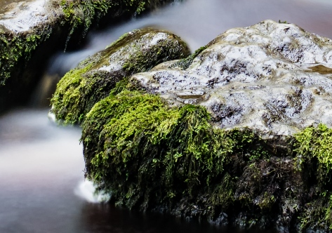 Canon G7X Sample 2 at 100%