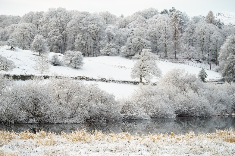 """Snow covered trees in the Lake District. Sony A7r, ISO100, f/14.0, 1/40""""."""