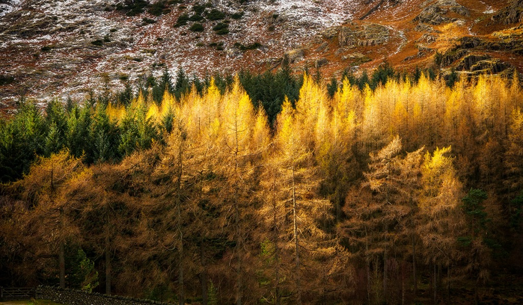 """Winter trees in the Lake District. Olympus EM5 with 12-40mm lens. ISO200, f/7.1, 1/80"""". 0.6 ND Grad."""