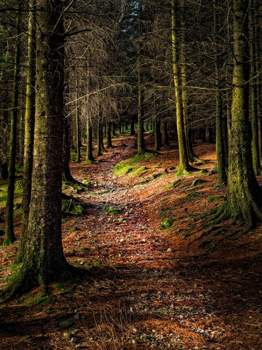 "Forest Scene. Olympus EM5, ISO200, f/6.3, 1/15"" handheld."
