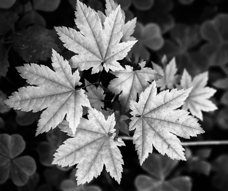 """Forest Leaves. Olympus EM5, f/3.5, 1/50"""" at ISO400."""