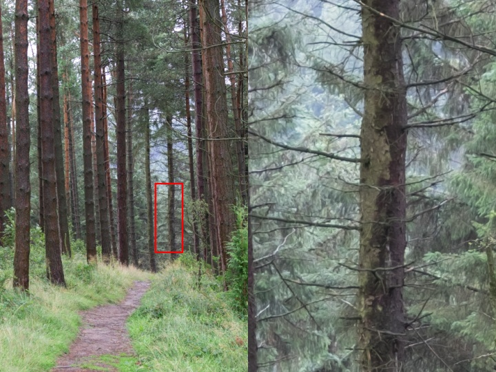Close of Pine trees showing the watercolour effect