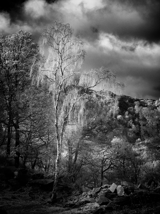 Infrared image captured using a converted Olympus EM5 and 12-40 lens. Processed in Lightroom and Nik Silver Efex Pro.