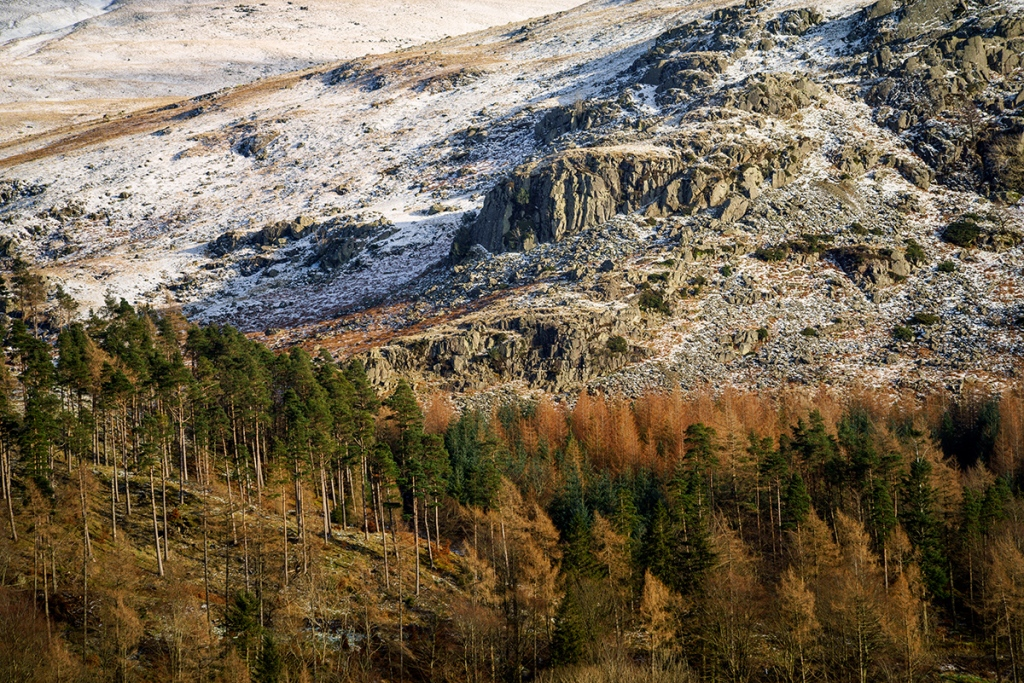 Trees on the mountain. Sony A7r + Canon 70-300 USM lens.