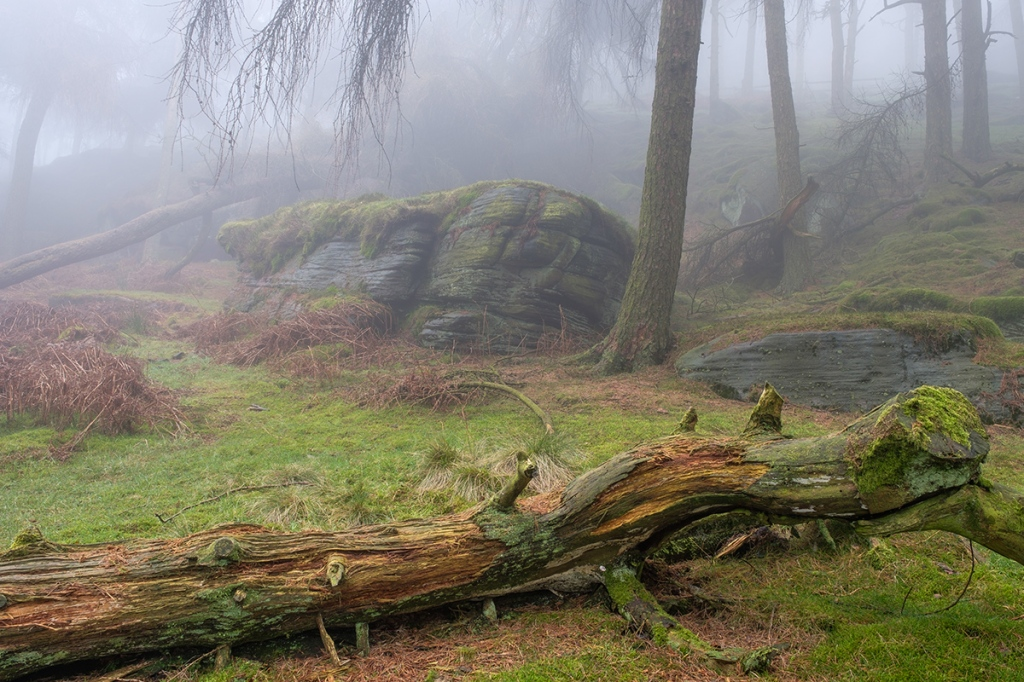 Misty morning in the trees at the Roaches. Fuji XT2 + 16-55 lens.
