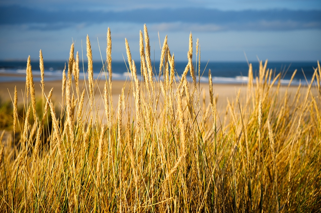 """Grass and dunes at sunset. Fuji X-T2 with 18-55 lens at 44mm. 1/1250"""" at f4.0, ISO200."""