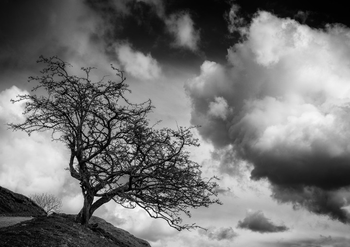 Tree near to Keld, The Yorkshire Dales.