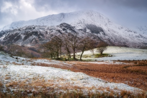 Walking between Elterwater and Little Langdale in the Lake District, I noticed this group of trees. See the text below for details of the image capture.