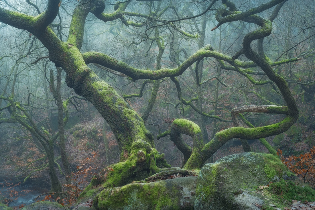 Padley Gorge trees in mist, The Peak District