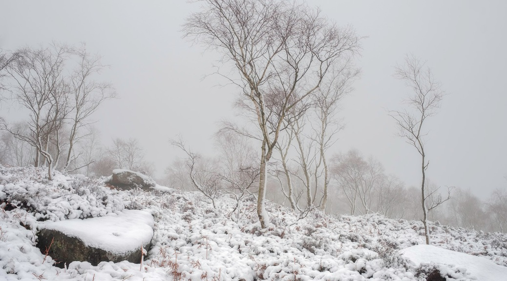 Silver birch at Surprise View, Peak District
