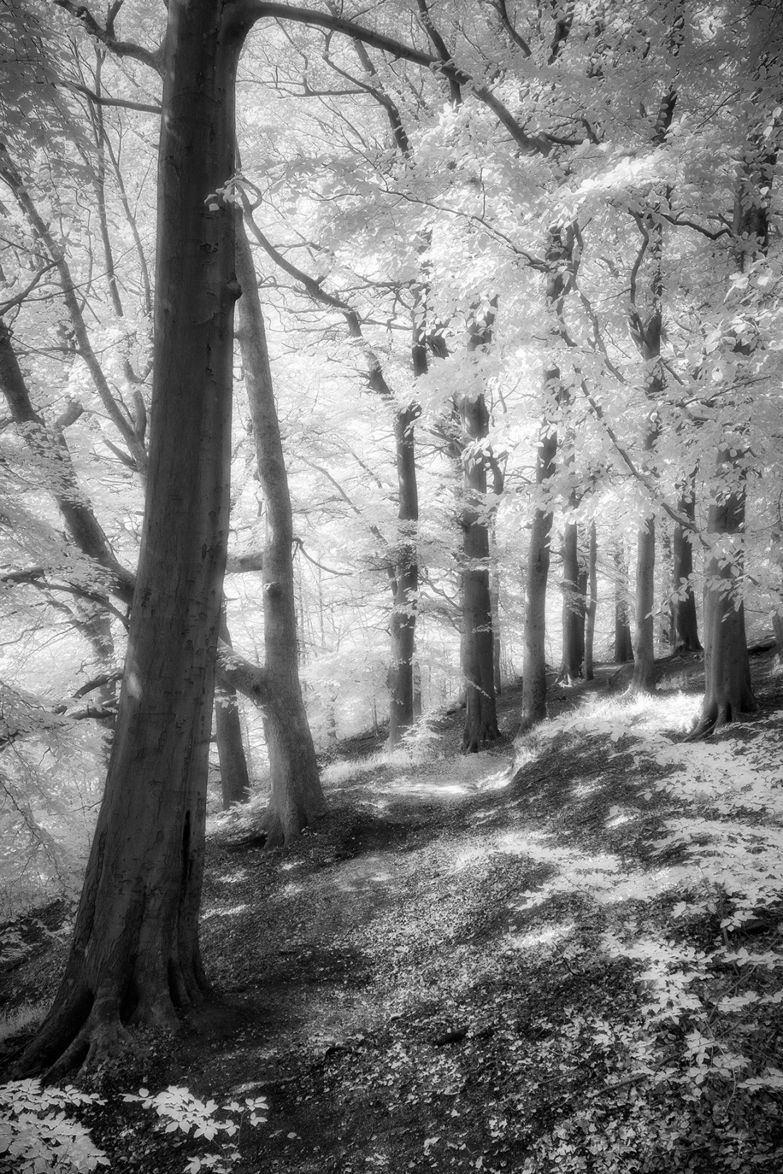 Woodland in infrared.