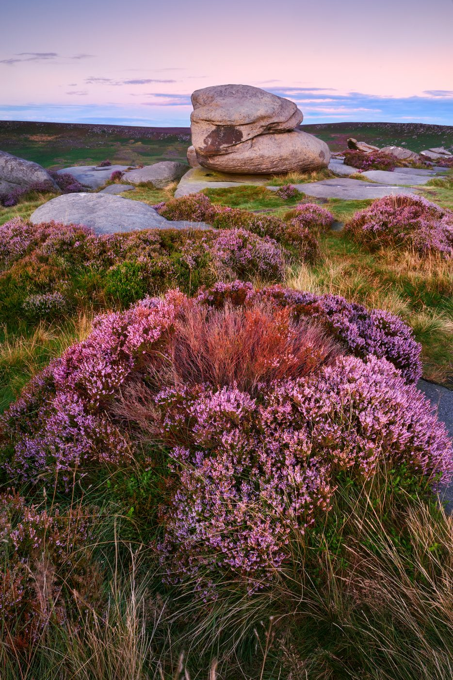Heather on Carl Wark in the Peak District