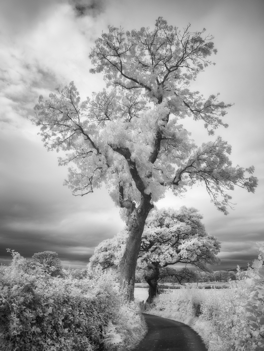 Location unknown. Panasonic GX1 with infrared conversion.