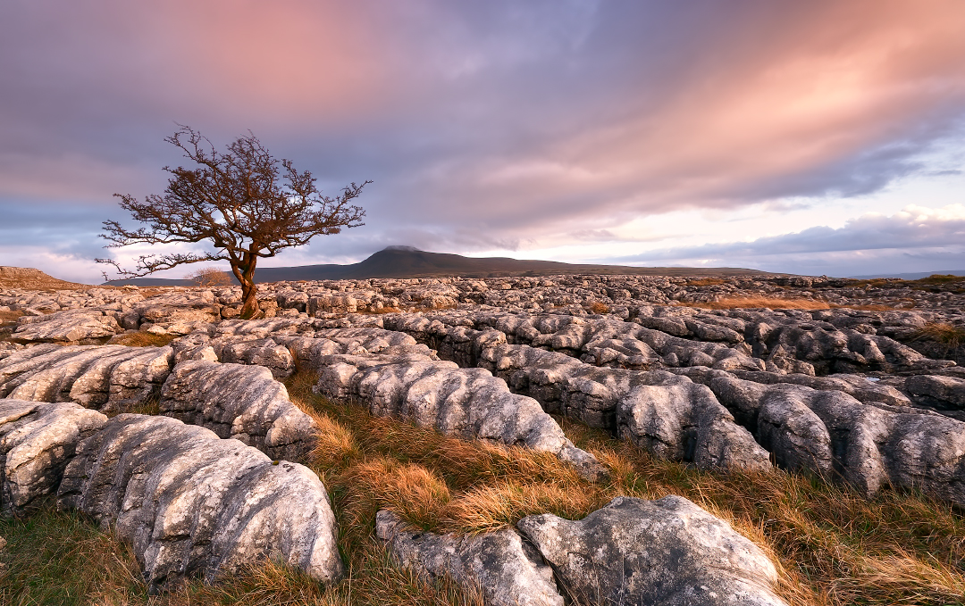 Limestone pavement on the slopes of Whernside.